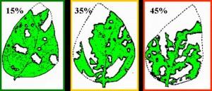 defoliation thresholds