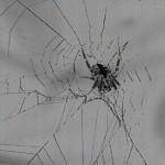 Web building spider